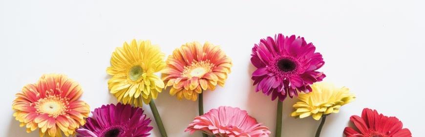 Découvrez notre sélection de cires parfumées Bridgewater Candles aux notes florales pour brûle-parfum.