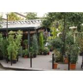 Au Jardin d'Edgar